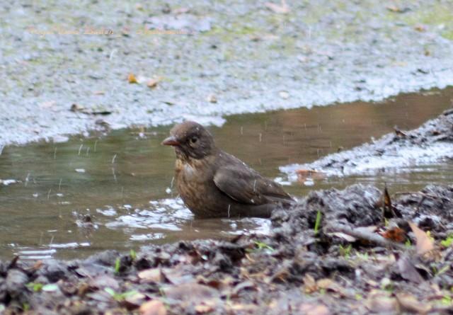 Vogel beim Baden_© Archimeda 1