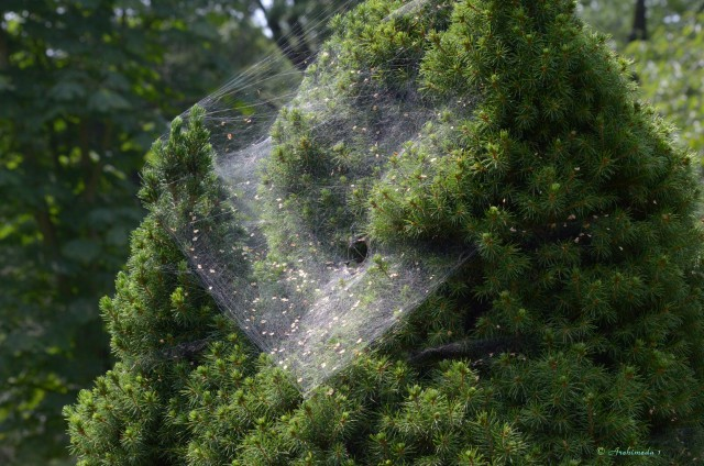 Trichternetzspinne_© Archimeda 1
