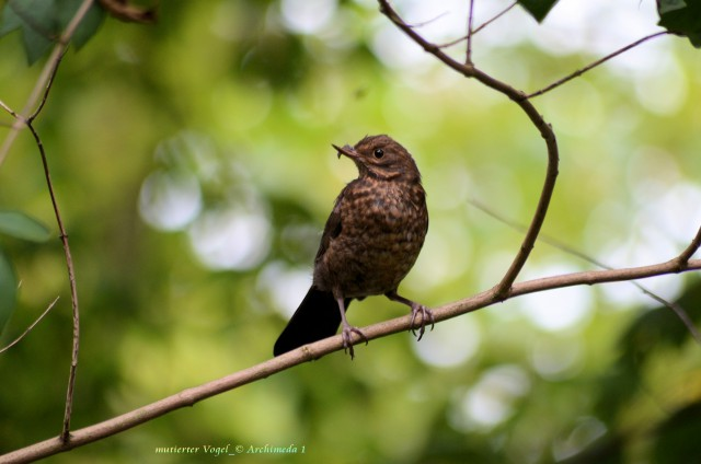 mutierter Vogel_© Archimeda 1