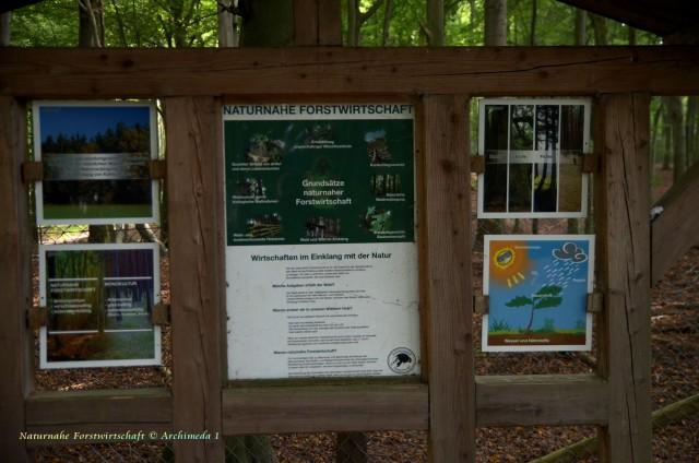 Naturnahe Forstwirtschaft © Archimeda 1-2