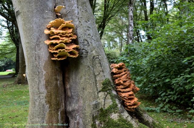 Neuer Baum mit Schwefelporling_© Archimeda1