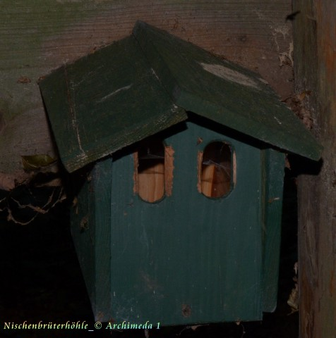 Nischenbrüterhöhle_© Archimeda 1