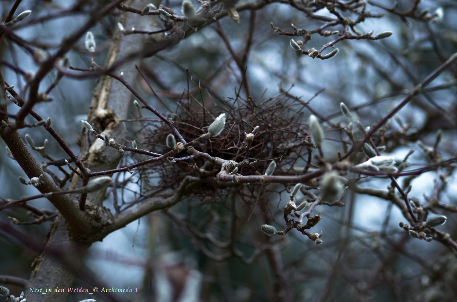 Nest_in den Weiden_© Archimeda 1