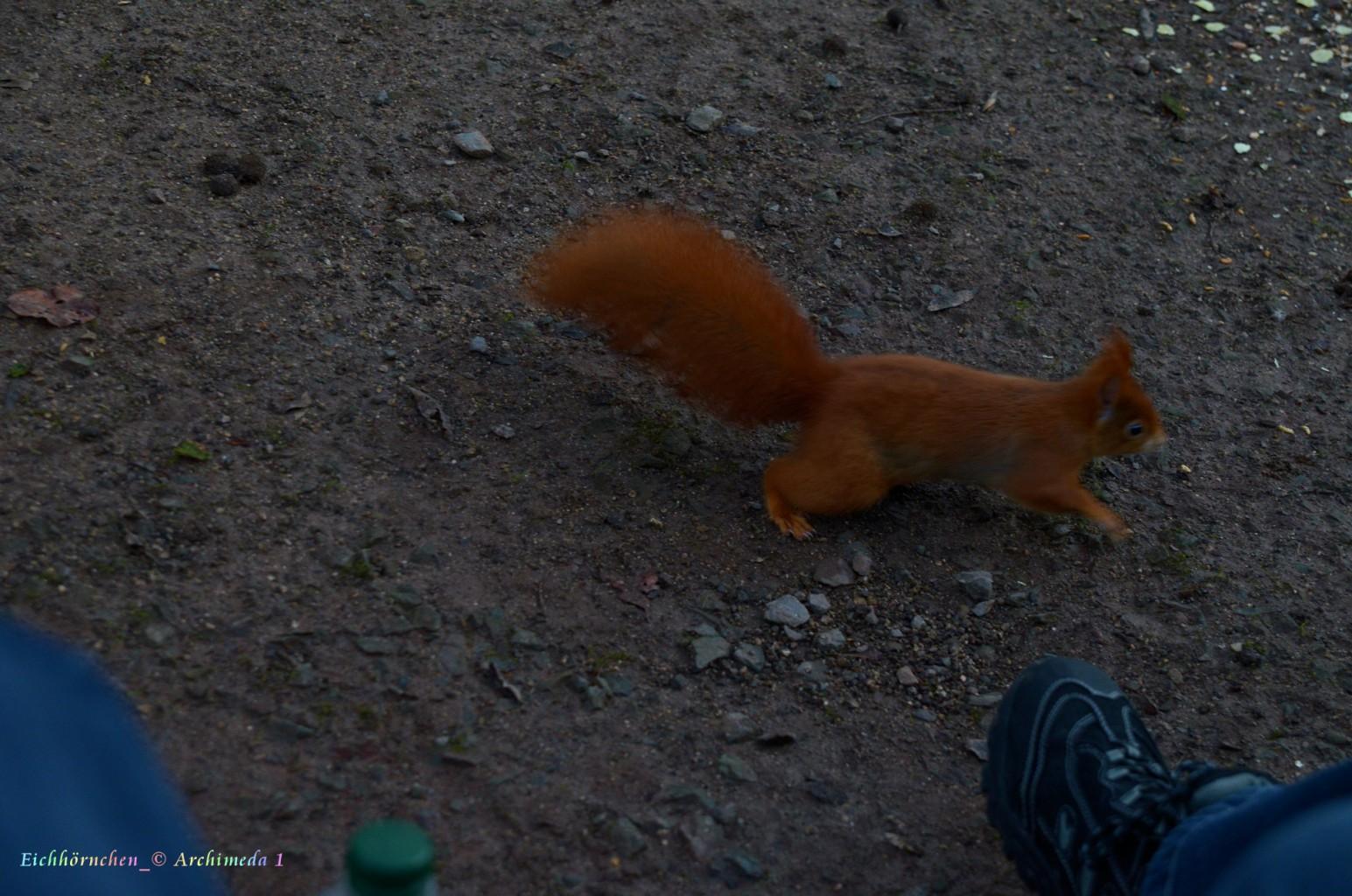 Eichhörnchen_© Archimeda 1_2