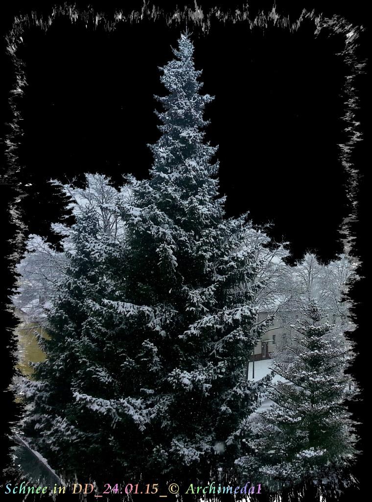 Schnee in DD_24.01.15_© Archimeda1