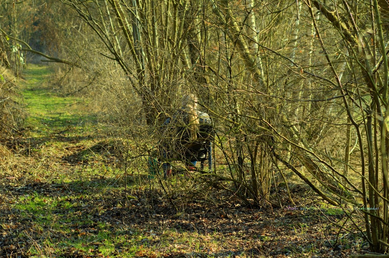 Archi auf Stuhl im Wald_© Archimeda1