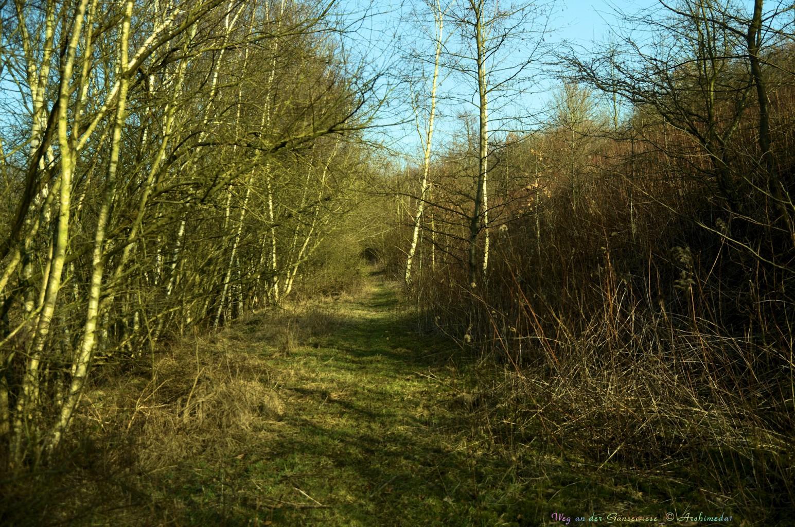 Weg an der Gänsewiese_© Archimeda1