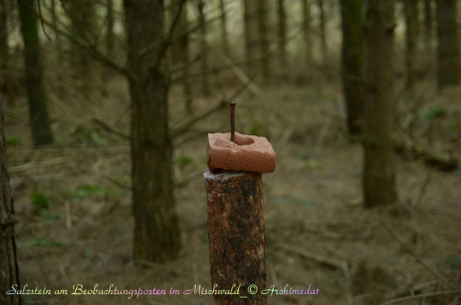 Salzstein am Beobachtungsposten im Mischwald_© Archimeda1