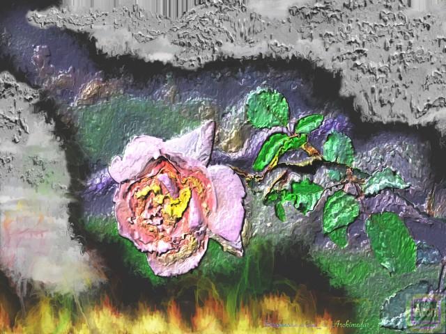Die brennende Rose