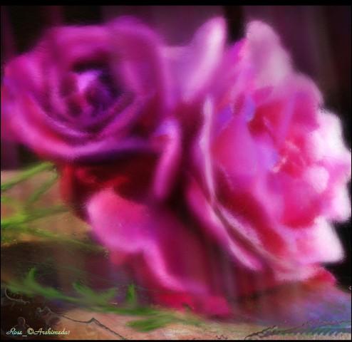 KATHY_Rose_© Archimeda1