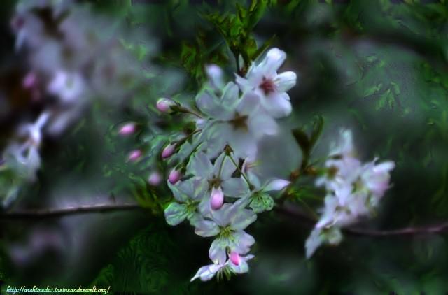 Obstblüten_© Archimeda1