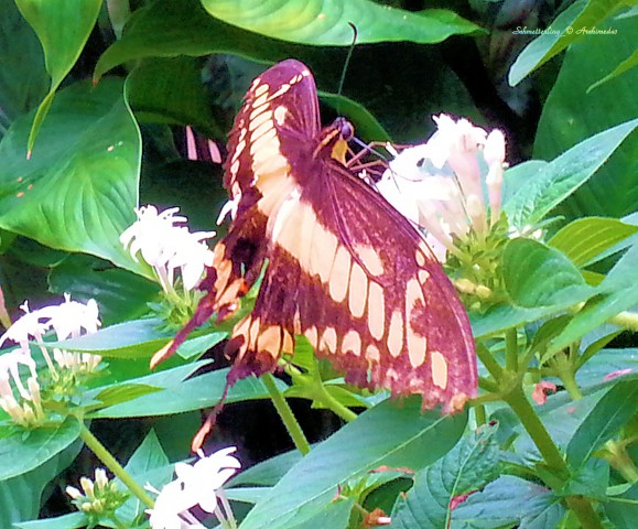 Schmetterling_© Archimeda1