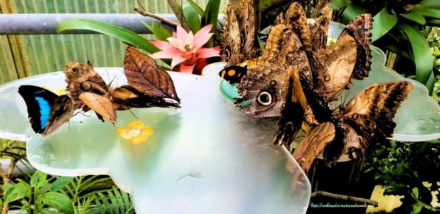 Schmetterlinge_© Archimeda1