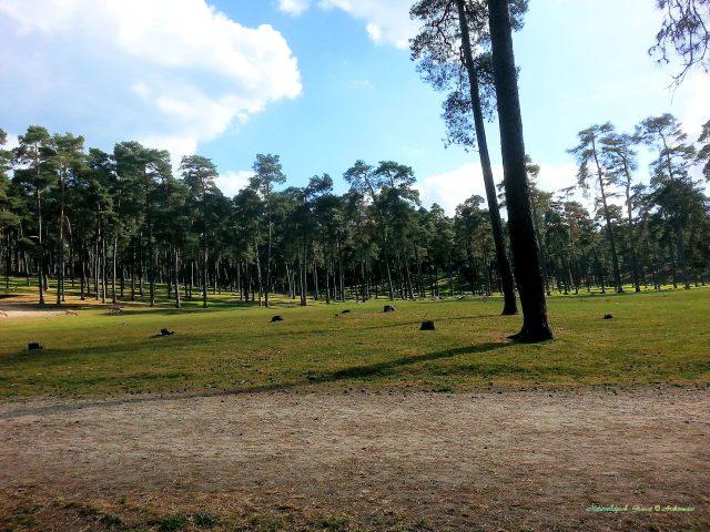naturwildpark_granat-archimeda1