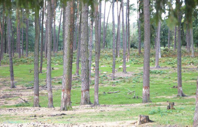 naturwildpark_granat_2_-archimeda1