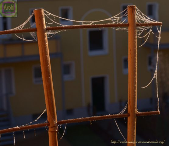 spinnenfaeden-im-frost_-archimeda1