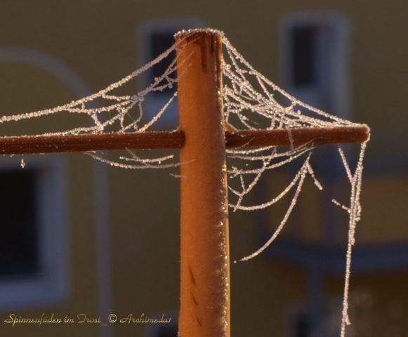 spinnenfaeden-im-frost_2_-archimeda1