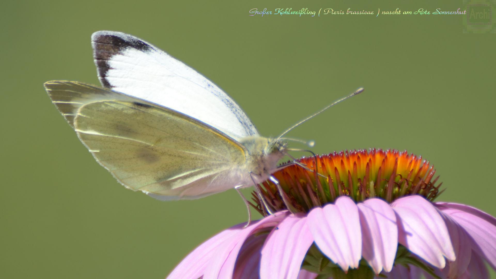 Suchergebnis auf für: Schmetterling Nicht